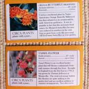 Circa Plants
